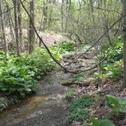 large_Little Valley Creek BT site 6.JPG